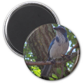 Scrub Jay 2 Inch Round Magnet