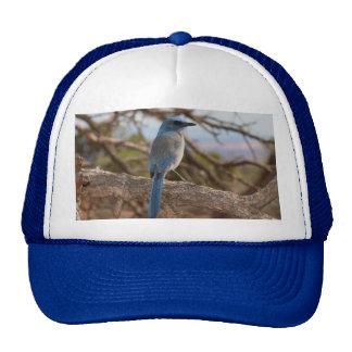 Scrub Jay Trucker Hat