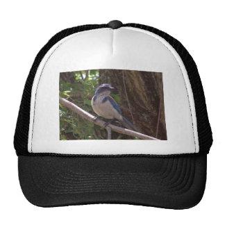 Scrub Jay Hat