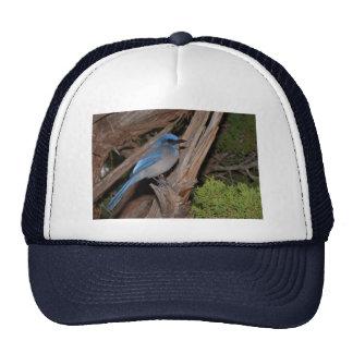 Scrub Jay Hats