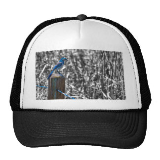 Scrub Jay II Mesh Hat