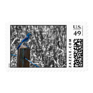 Scrub Jay II Stamps