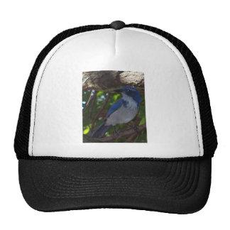 Scrub Jay Mesh Hat