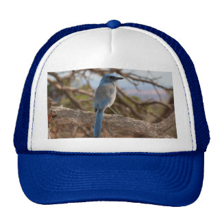 Scrub Jay Mesh Hats