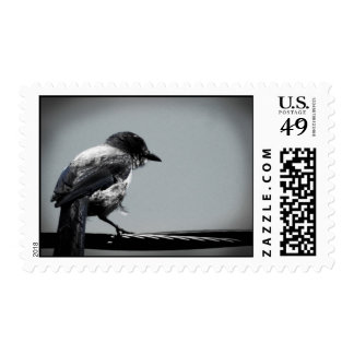 Scrub Jay on a Wire Postage Stamp