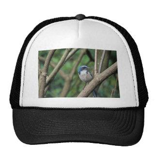 Scrub Jay, Western Trucker Hat