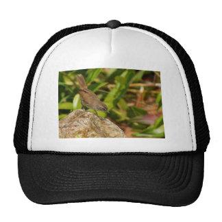 Scrub Wren Hat