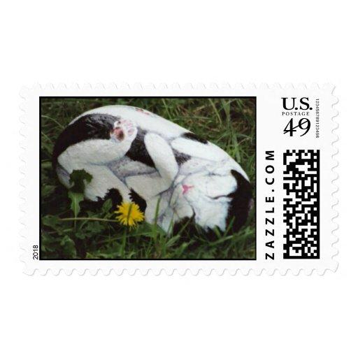 """""""Scruff"""" cat rock stamp"""