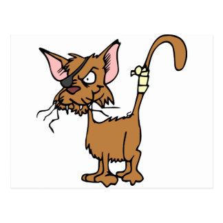 Scruffy Cat Postcard