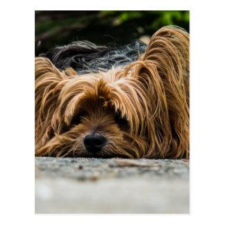 Scruffy Dog Laying Down Postcard