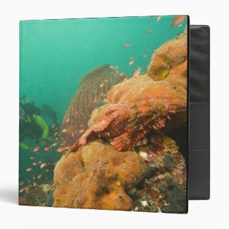 scuba diver & Scorpionfish Scorpanopsis Binder