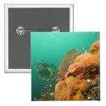 scuba diver & Scorpionfish Scorpanopsis Pinback Buttons
