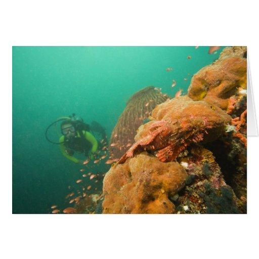 scuba diver & Scorpionfish Scorpanopsis Greeting Card