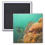 scuba diver & Scorpionfish Scorpanopsis Fridge Magnets