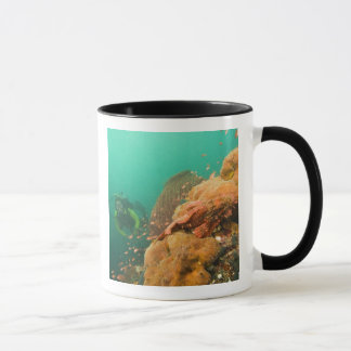 scuba diver & Scorpionfish Scorpanopsis Mug