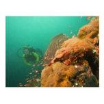scuba diver & Scorpionfish Scorpanopsis Postcard