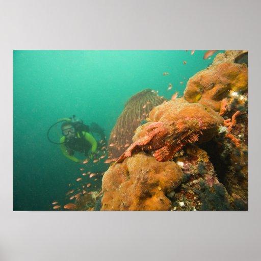 scuba diver & Scorpionfish Scorpanopsis Poster