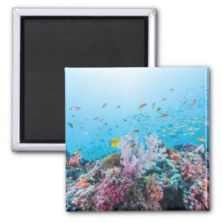 Scuba Diving With Colorful Reef And Coral Magnet