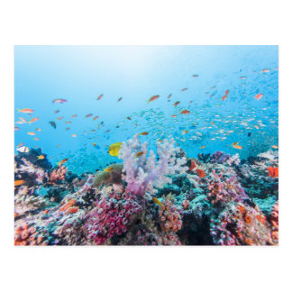 Scuba Diving With Colorful Reef And Coral Postcard