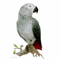 Sculpture - African Grey Parrot