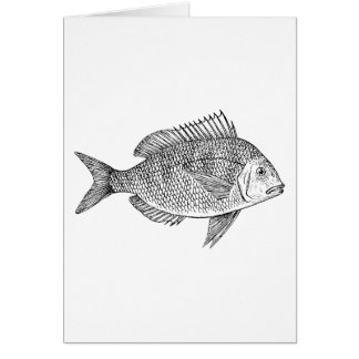 Scup Fish Graphic Card