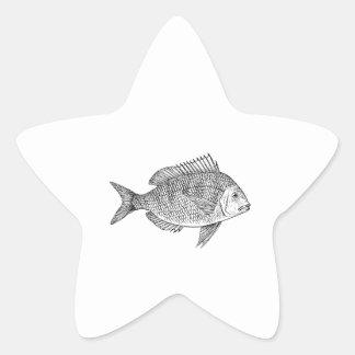 Scup Fish Graphic Sticker