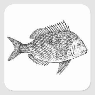 Scup Fish Graphic Square Stickers