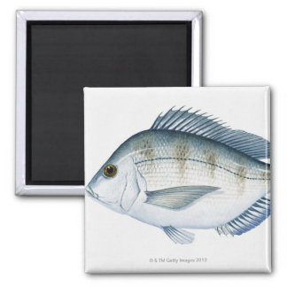 Scup Fish Magnet
