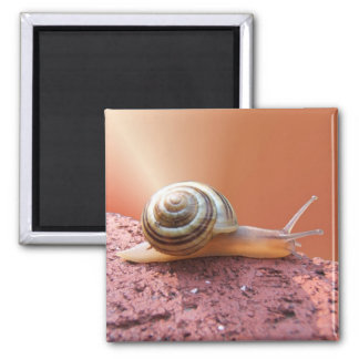 Scurrying Snail ~ magnet