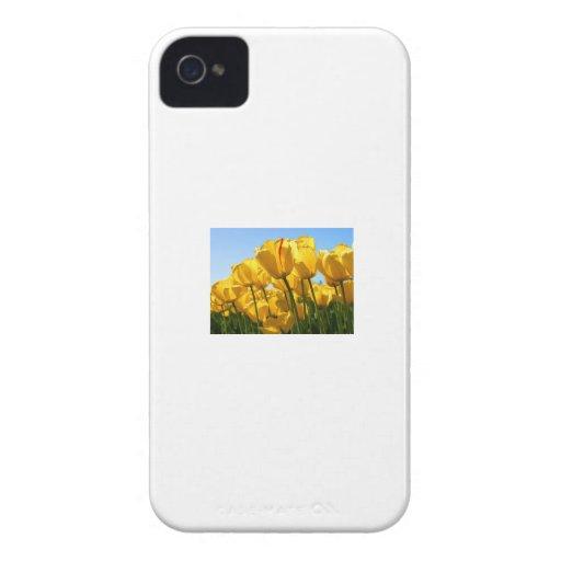 sdfsd iPhone 4 carcasas