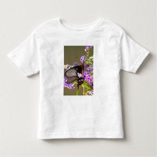 SE Asia, Tailandia, Doi Inthanon, Papilio Playera De Niño