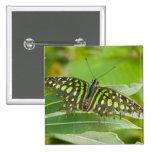 SE Asia, Tailandia, mariposa atada de Jay Pin Cuadrada 5 Cm