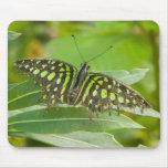 SE Asia, Tailandia, mariposa atada de Jay Alfombrillas De Ratón