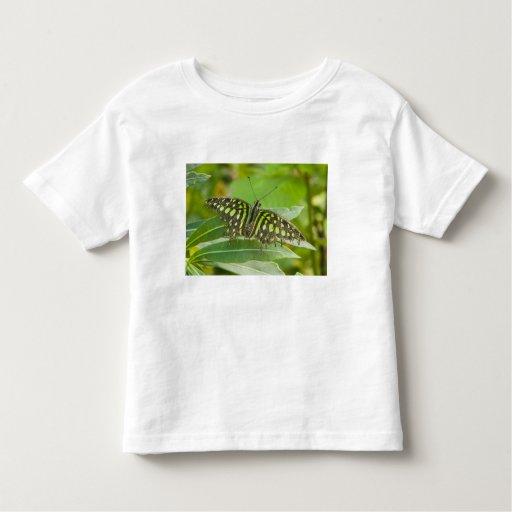 SE Asia, Tailandia, mariposa atada de Jay Tshirt