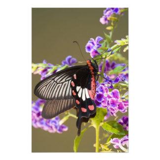 SE Asia, Thailand, Doi Inthanon, Papilio Photographic Print