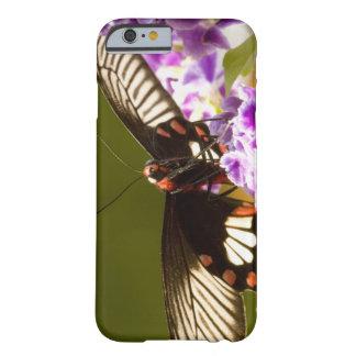 SE Asia, Thailand, Doi Inthanon, Papilio polytes 2 Barely There iPhone 6 Case