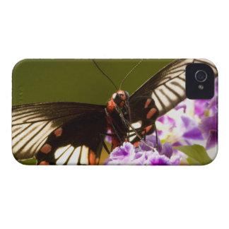 SE Asia, Thailand, Doi Inthanon, Papilio polytes 2 Case-Mate iPhone 4 Case