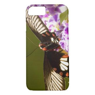 SE Asia, Thailand, Doi Inthanon, Papilio polytes 2 iPhone 8/7 Case
