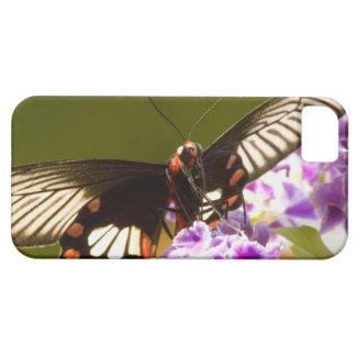 SE Asia, Thailand, Doi Inthanon, Papilio polytes 2 iPhone SE/5/5s Case