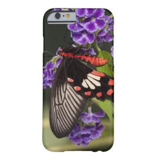 SE Asia, Thailand, Doi Inthanon, Papilio polytes 3 Barely There iPhone 6 Case