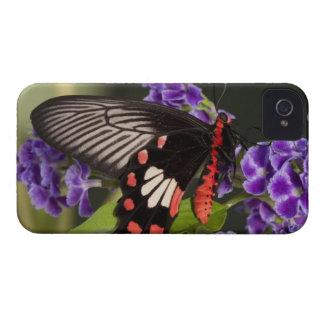 SE Asia, Thailand, Doi Inthanon, Papilio polytes 3 iPhone 4 Cover