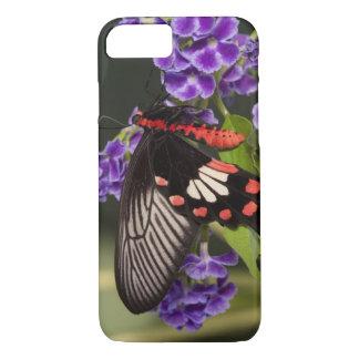 SE Asia, Thailand, Doi Inthanon, Papilio polytes 3 iPhone 7 Case