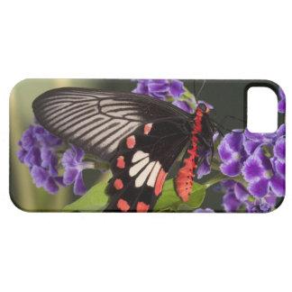 SE Asia, Thailand, Doi Inthanon, Papilio polytes 3 iPhone SE/5/5s Case