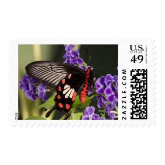 SE Asia, Thailand, Doi Inthanon, Papilio polytes 3 Postage