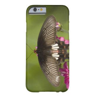 SE Asia, Thailand, Doi Inthanon, Papilio polytes Barely There iPhone 6 Case