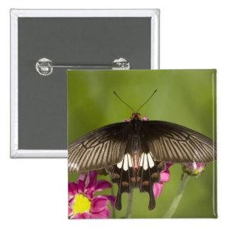 SE Asia, Thailand, Doi Inthanon, Papilio polytes Button