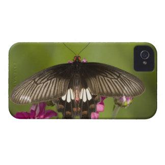 SE Asia, Thailand, Doi Inthanon, Papilio polytes iPhone 4 Cover