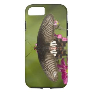 SE Asia, Thailand, Doi Inthanon, Papilio polytes iPhone 8/7 Case