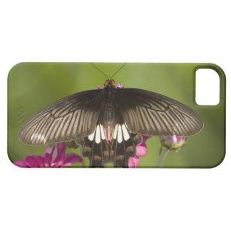 SE Asia, Thailand, Doi Inthanon, Papilio polytes iPhone SE/5/5s Case
