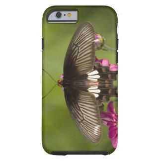 SE Asia, Thailand, Doi Inthanon, Papilio polytes Tough iPhone 6 Case